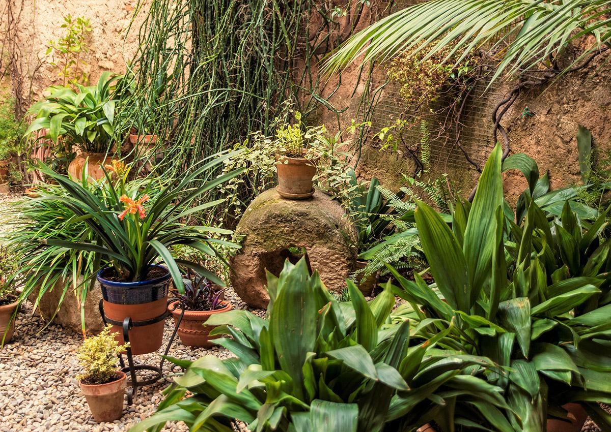 Cada planta escull quin és el seu lloc preferit del jardí